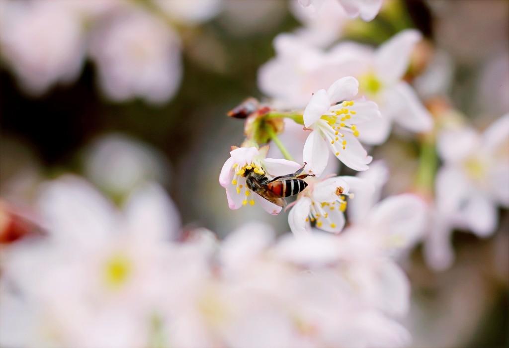 wespen weg houden