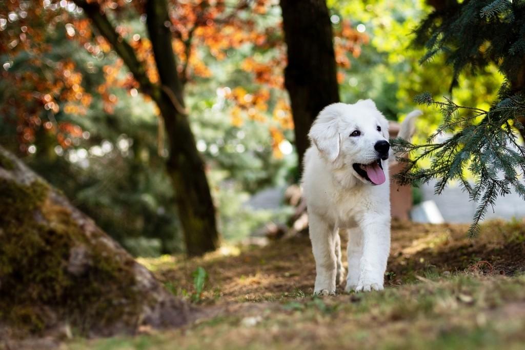 hondenwandelaar