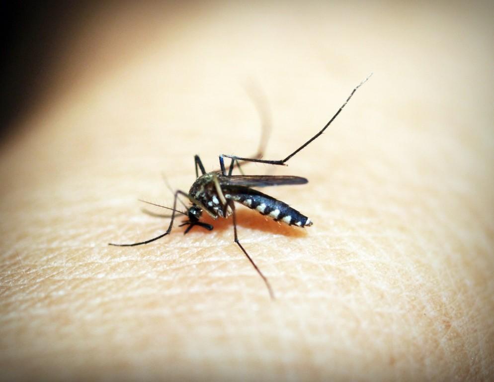 natuurlijke middelen tegen muggen