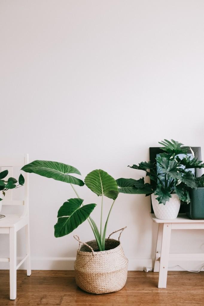 kamerplanten in de zomer