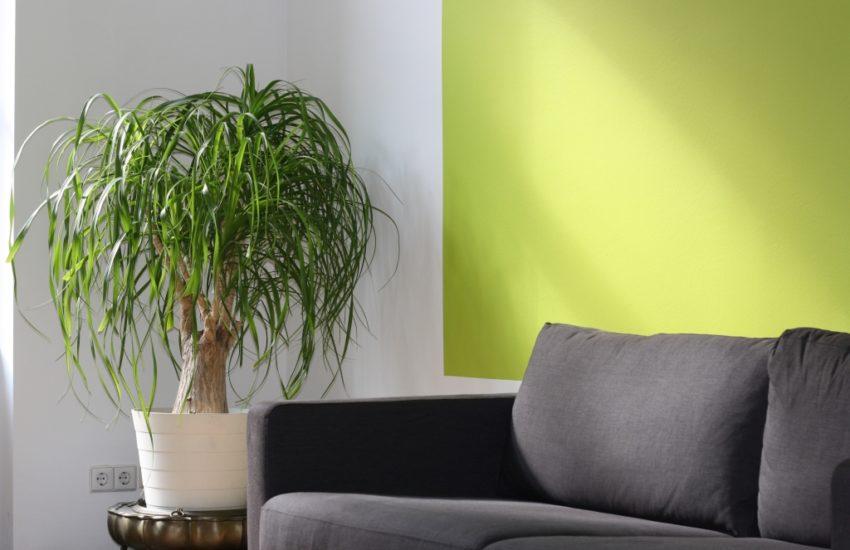 kamerplanten verzorgen in de zomer