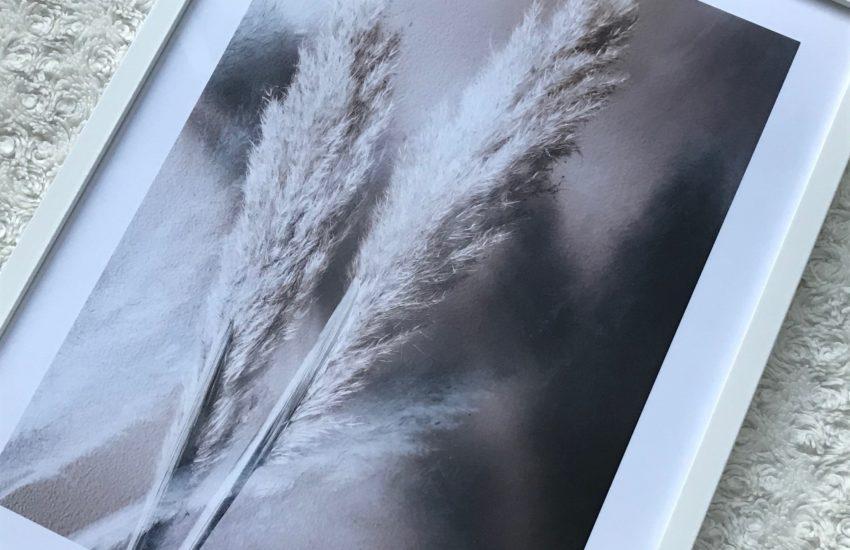 poster pampasgras