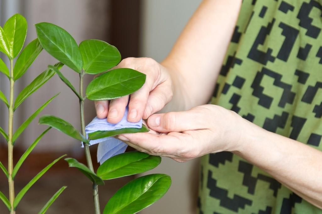 kamerplanten afstoffen
