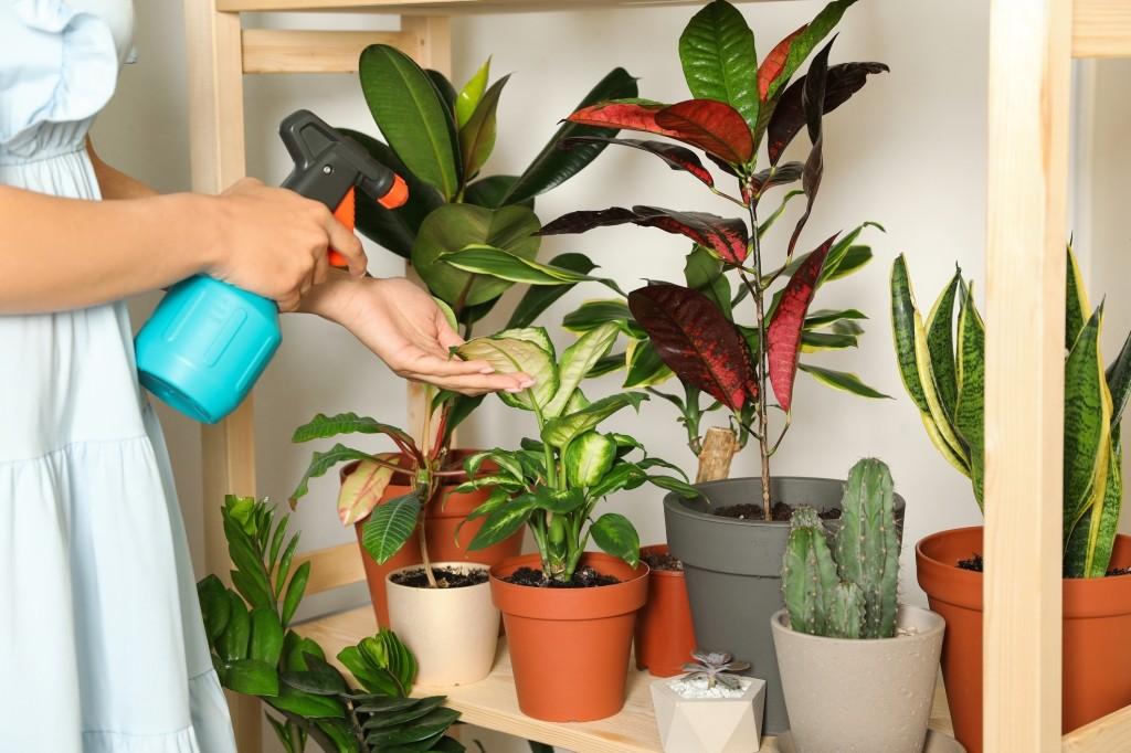 stoffige planten