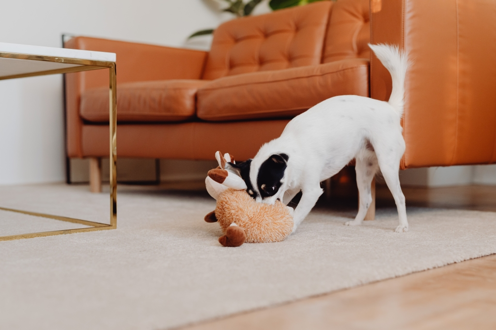 interieur met huisdieren