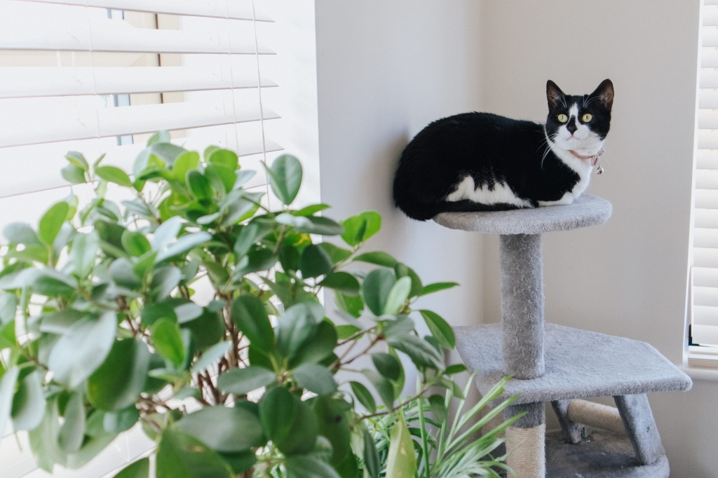kat interieur
