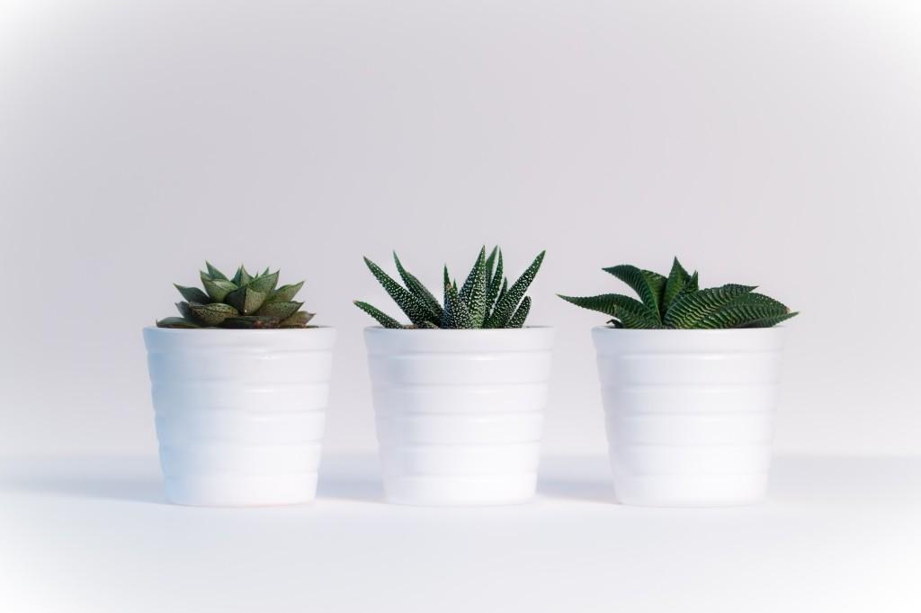 vetplanten verzorgen