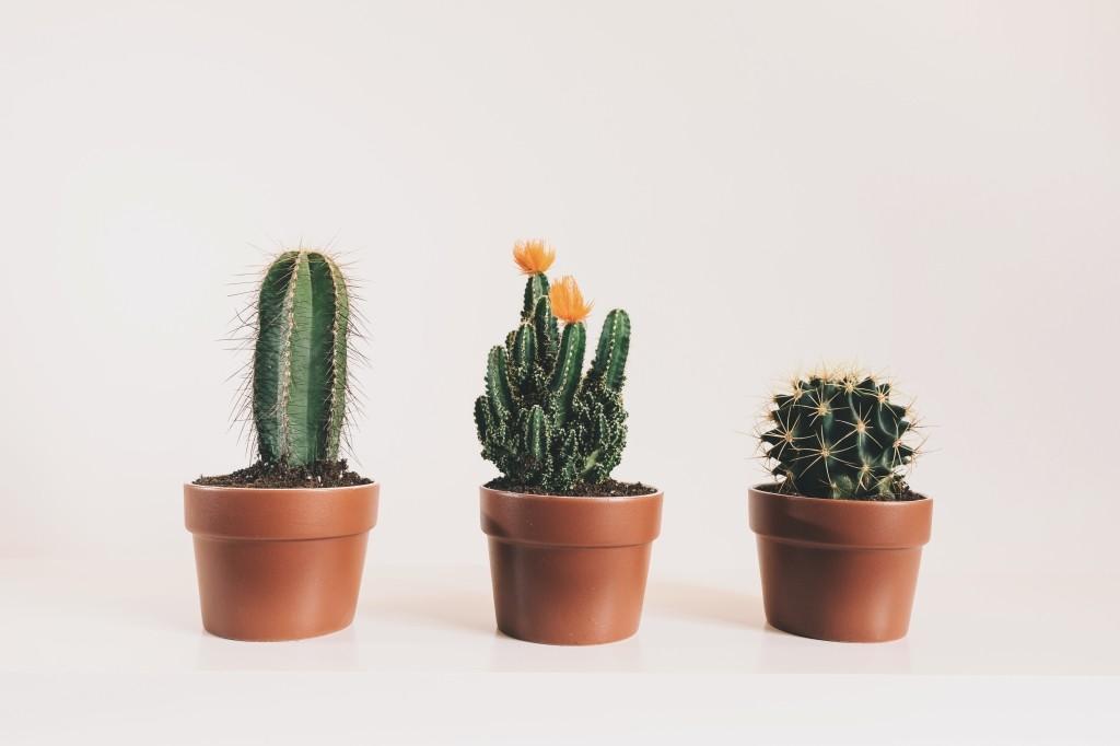 vetplantje water geven
